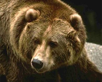 Во Флориде  велосипедист врезался в медведя